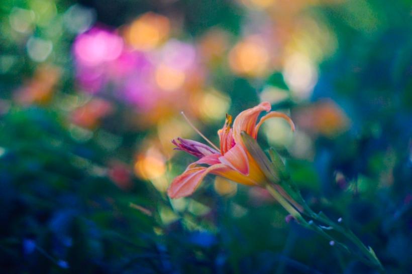 Flower Bokeh – Projector Lens.jpg
